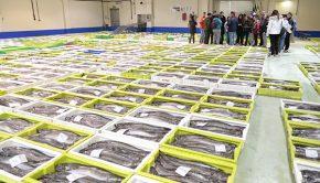 Nueva actividad Cocooking sobre pesca sostenible